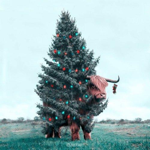 Фантастические животные в сюрреалистических фотоманипуляциях Жульена Табе (18 фото)