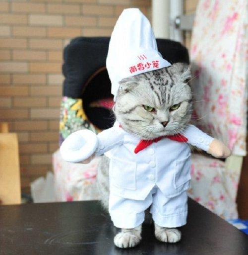 Кошки, у которых явные способности к кулинарии (13 фото)