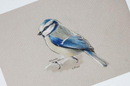 Птицы во всей красе на рисунках Симона Захгубера (8 фото)