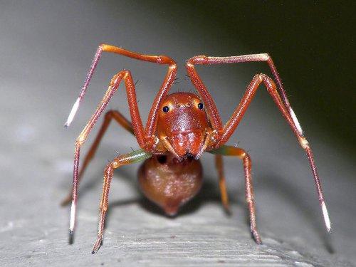 Настоящие инопланетяне: впечатляющие насекомые и пауки крупным планом (12 фото)