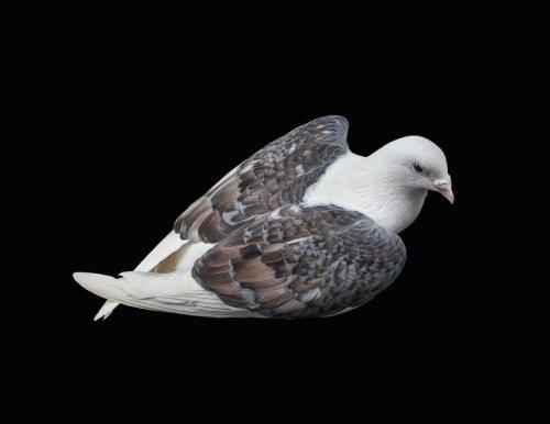Портреты городских голубей, доказывающие, что это действительно красивые птицы (14 фото)