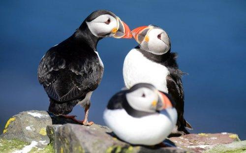 Трогательные фотографии птиц (18 фото)
