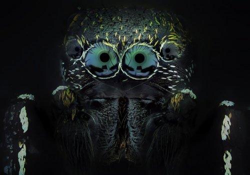 Макрофотографии насекомых, на которых они похожи на жутких инопланетных существ (10 фото)