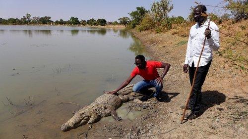 Священные крокодилы из Базуле (5 фото)