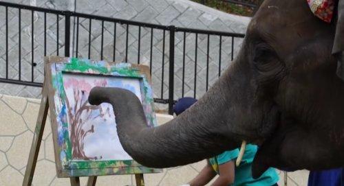 Слониха из японского зоопарка показал свой уникальный художественный талант, нарисовав цветущую сакуру