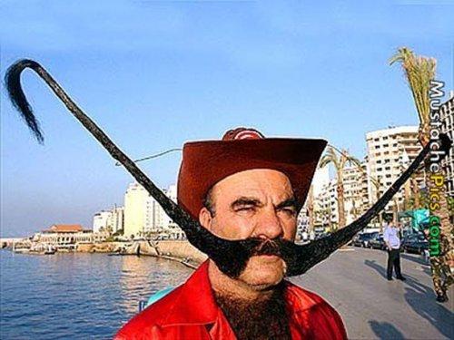 Самые сумасшедшие бороды (20 фото)