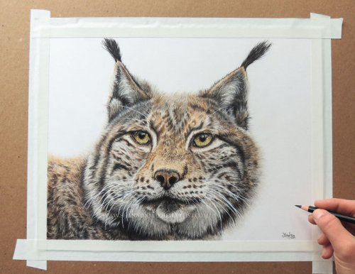 Художница создаёт гиперреалистичные карандашные рисунки животных (7 фото)
