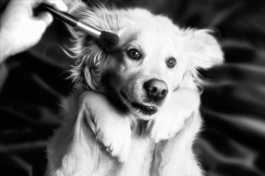 Очаровательный пёс воспроизводит культовые фотографии Мадонны и, кажет