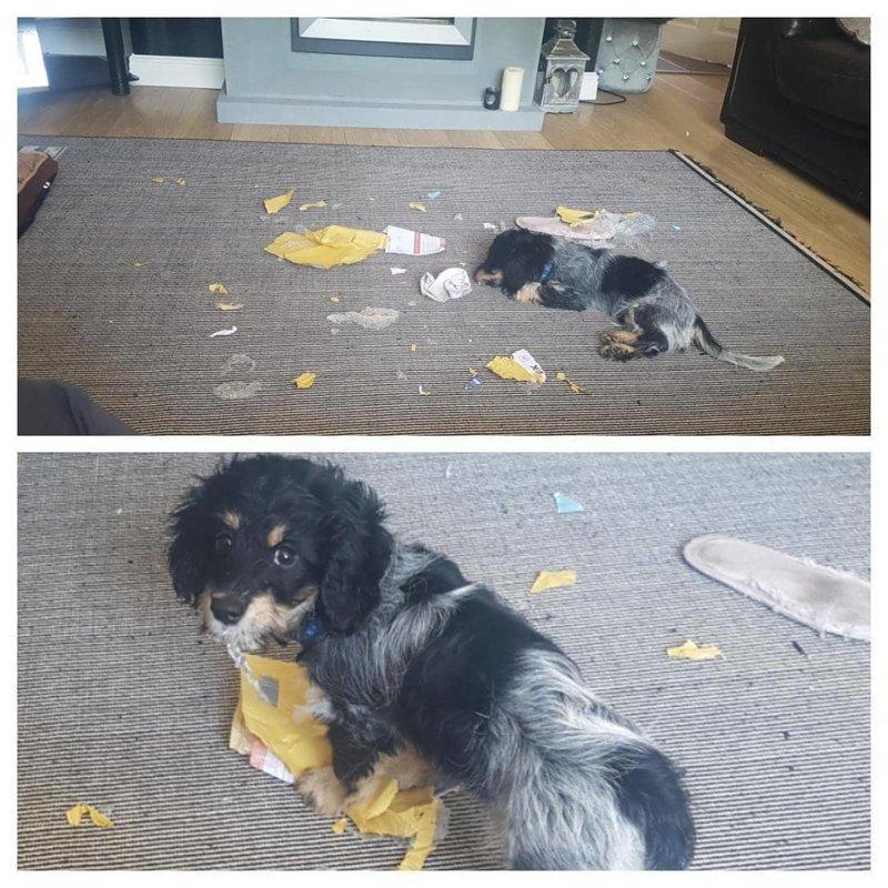 Собаки-хулигаки, пойманные с поличным (25 фото)