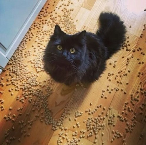 Кошки-хулиганки, пойманные с поличным (19 фото)