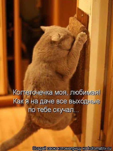 Лучшая котоматрица недели (33 фото)