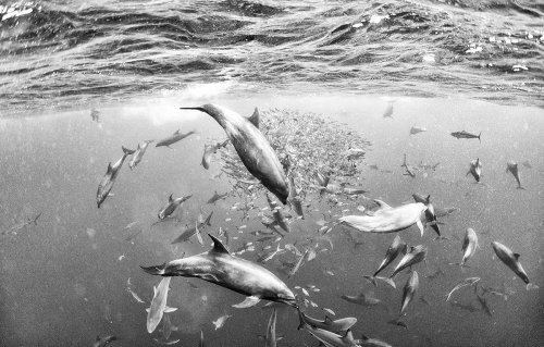 Чёрно-белые фотографии, раскрывающие всю красоту подводного мира (11 фото)