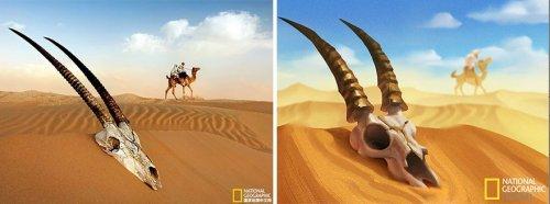 Художник из Шанхая превращает фотографии от National Geographic в великолепные иллюстрации (9 фото)