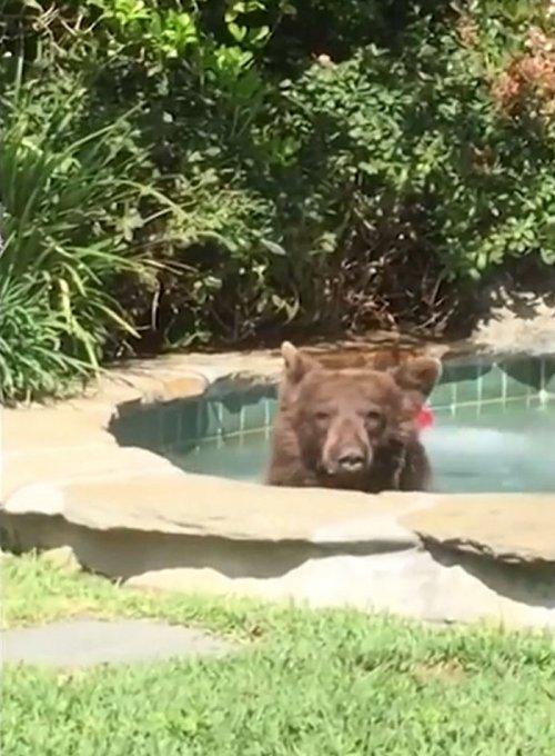 Медведь, который проводит лето лучше тебя (5 фото + видео)