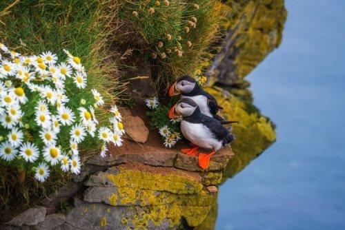 Пейзажные фотографии Альберта Дроса, доказывающие, почему Исландия является раем для фотографов (20 фото)