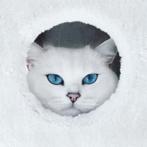 Instagram-звезда по кличке Коби с самыми завораживающими голубыми глазами (12 фото)