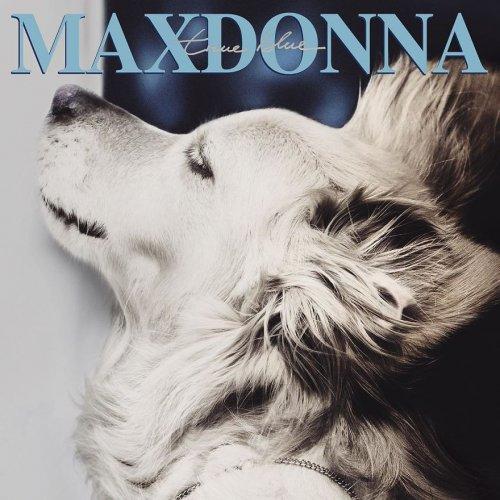 Очаровательный пёс воспроизводит культовые фотографии Мадонны и, кажется, делает это лучше неё (11 фото)