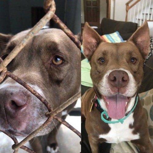 Собаки до и после того, как обрели любящий дом (24 фото)