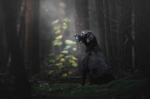 Фотографии-победители конкурса Kennel Club Dog Photographer of the Year 2018 (24 фото)