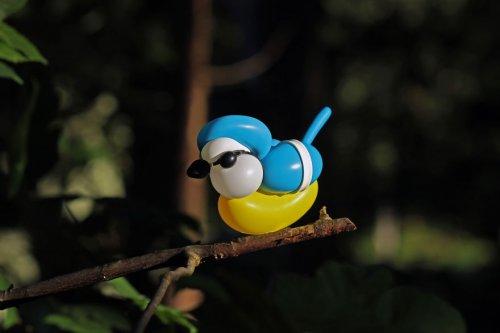 Красочные птицы из воздушных шариков (5 фото)