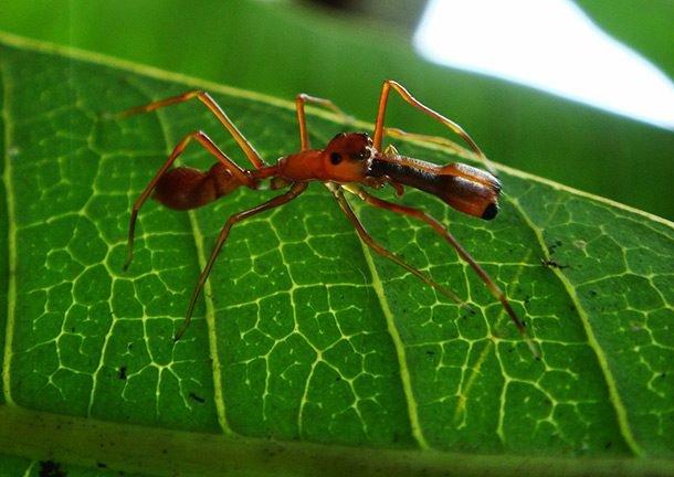 ТОП-25: Самые странные пауки в мире рекомендации