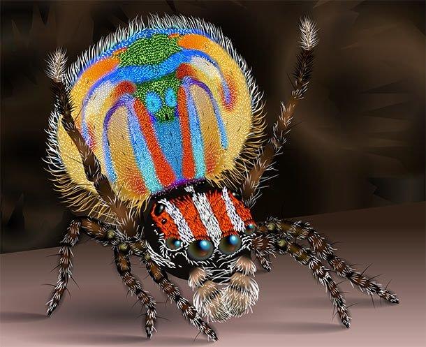 ТОП-25: Самые странные пауки в мире изоражения