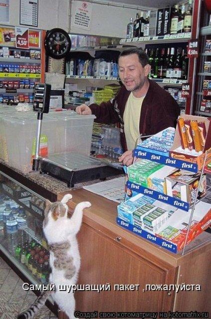 Лучшая котоматрица на Бугаге (34 фото)