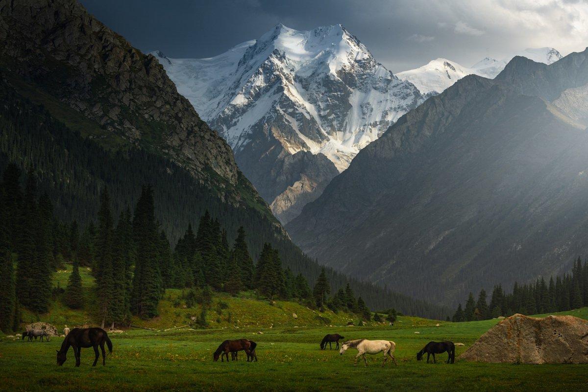 киргизские картинки хитрая схема