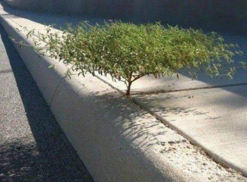 Деревья прорастут где угодно и через что угодно (19 фото)