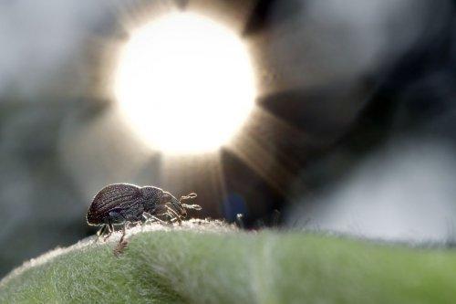 """""""Ранние пташки"""": портреты насекомых на восходе солнца в фотографиях Данаи Вулф (22 фото)"""