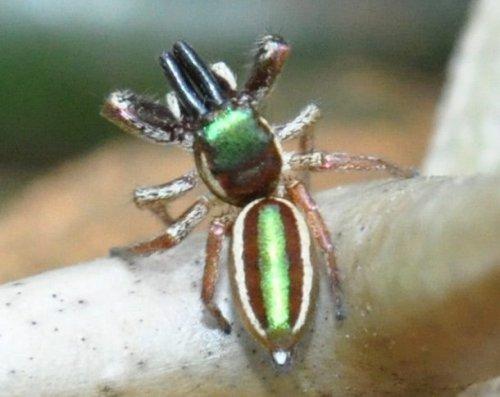 ТОП-25: Самые странные пауки в мире