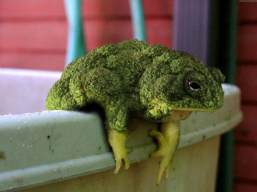 Фотошоп-мастера превращают животных в растения, и вам стоит это увидеть (27 фото)