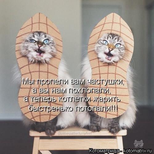 Лучшая котоматрица недели на Бугаге (26 фото)