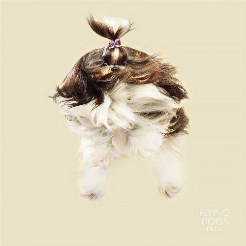 """""""Летающие"""" собаки в фотографиях Юлии Кристе (15 фото)"""