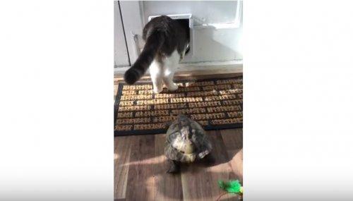 Когда ты черепаха, но чувствуешь себя кошкой