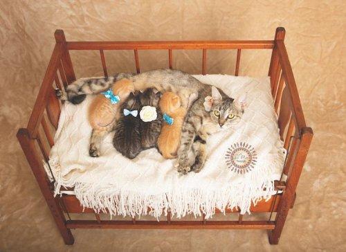 Очаровательные спасённые котята в фотосессии, которая должна помочь им найти новую любящую семью (8 фото)