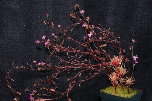 ТОП-10: Дьявольские или невероятные плотоядные и движущиеся растения