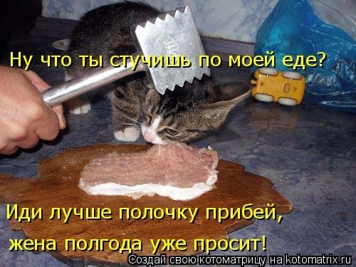 Свежая котоматрица для всех (35 фото)