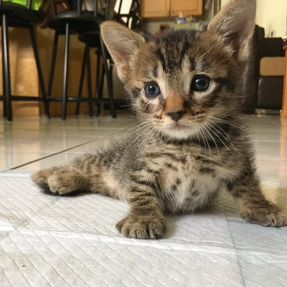 мини фотки котят сообщали, что