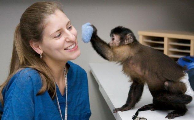 ТОП-10: Странные животные - помощники, которых вы не каждый день встре