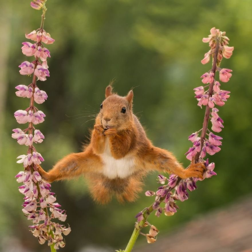 Финалисты фотоконкурса Comedy Wildlife Photography Awards 2018 (40 фот