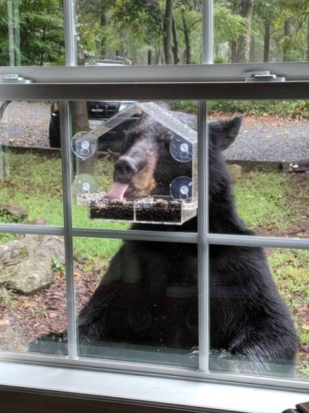 Очаровательные животные, которые вызовут вашу улыбку (28 фото)