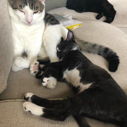 Бывший дворовый кот с недоразвитыми лапками усыновил маленьких котят, которых тоже спасли с улицы (8 фото + видео)