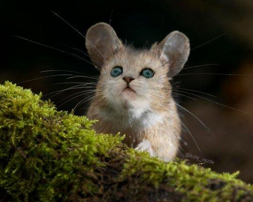 Котейки прелестны в любом обличии (13 фото)