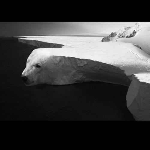 Художник превращает животных в сюрреалистический окружающий мир (17 фото)