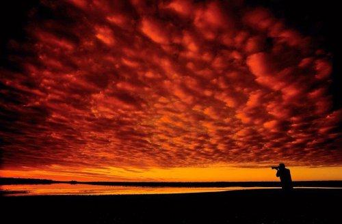 Дикая природа Африки через объектив фотографа Грега Дю Туа (16 фото)