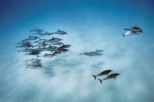 Работы нескольких лучших фотографов дикой природы National Geographic (14 фото)