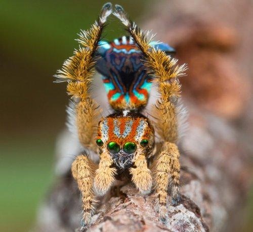 Удивительная макросъемка насекомых (16 фото)