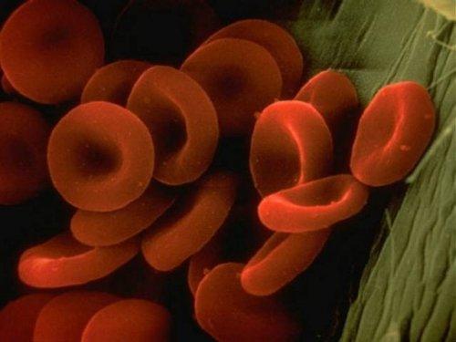 Организм человека через микроскоп (16 фото)