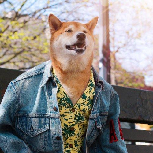 Mensweardog, самый стильный пёс в мире (19 фото)